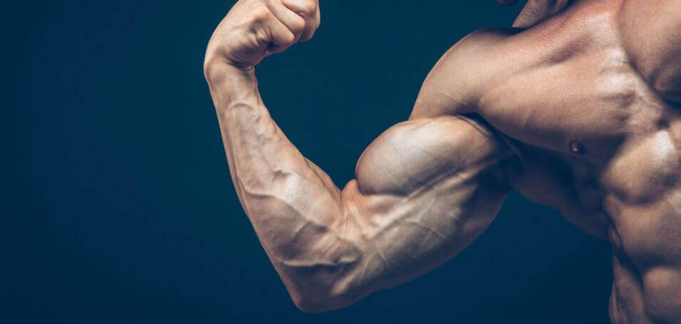 Koolhydraten zijn niet noodzakelijk voor spiergroei