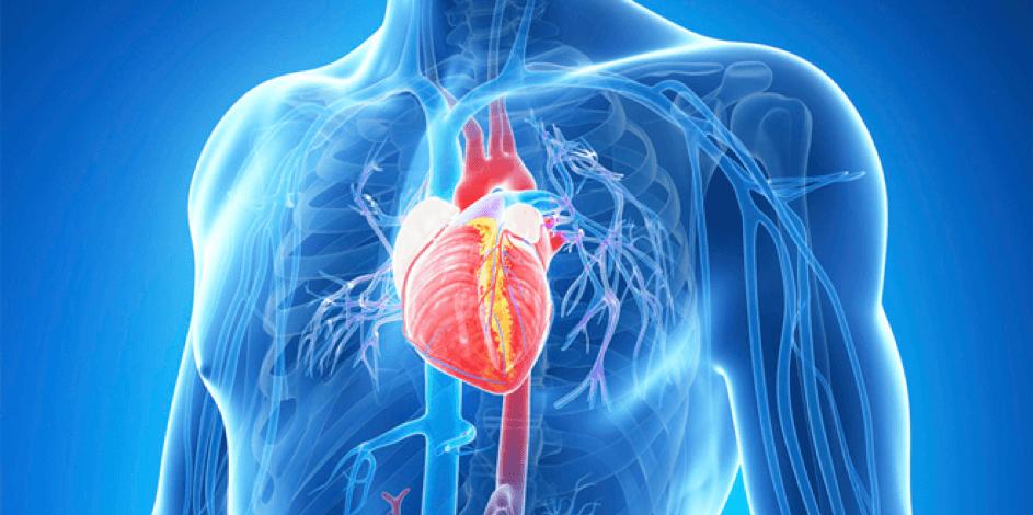Hart- en vaatziekten, ketogeen dieet, vetzuren