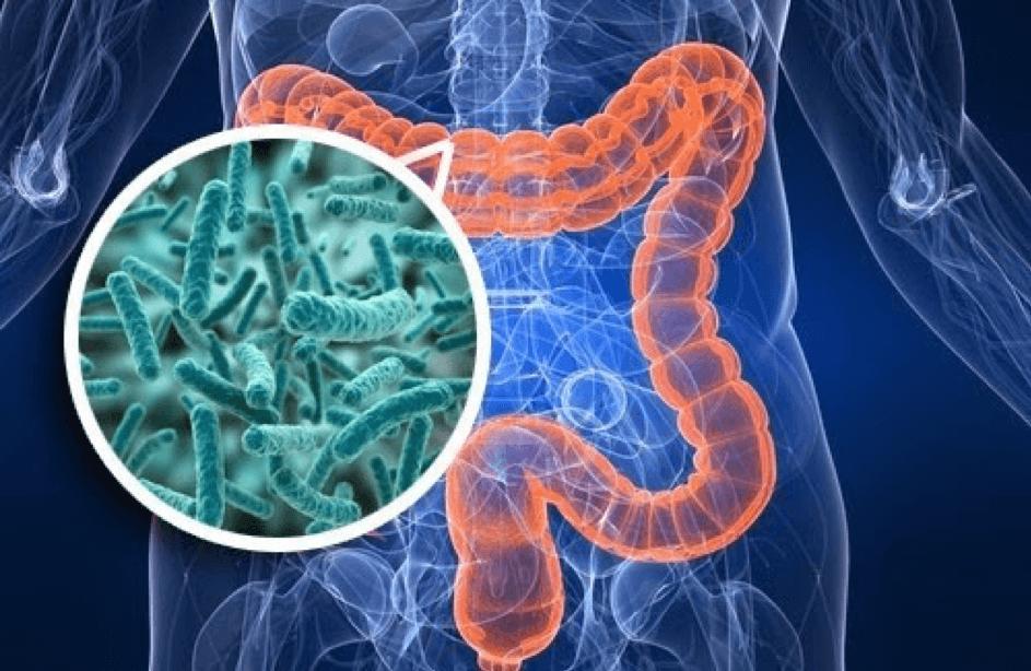 Darmkanaal met bacterien